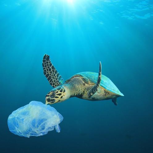 Inquinamento e attivita' umane: impatto sugli organismi marini