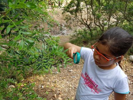2n Curs. Descobrim el bosc (La Victòria)