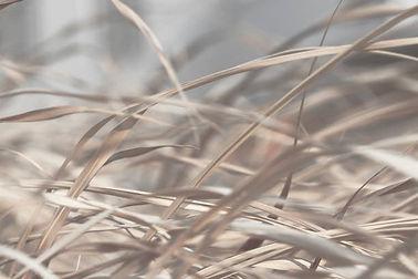 grasses-1326818293-612x612.jpg