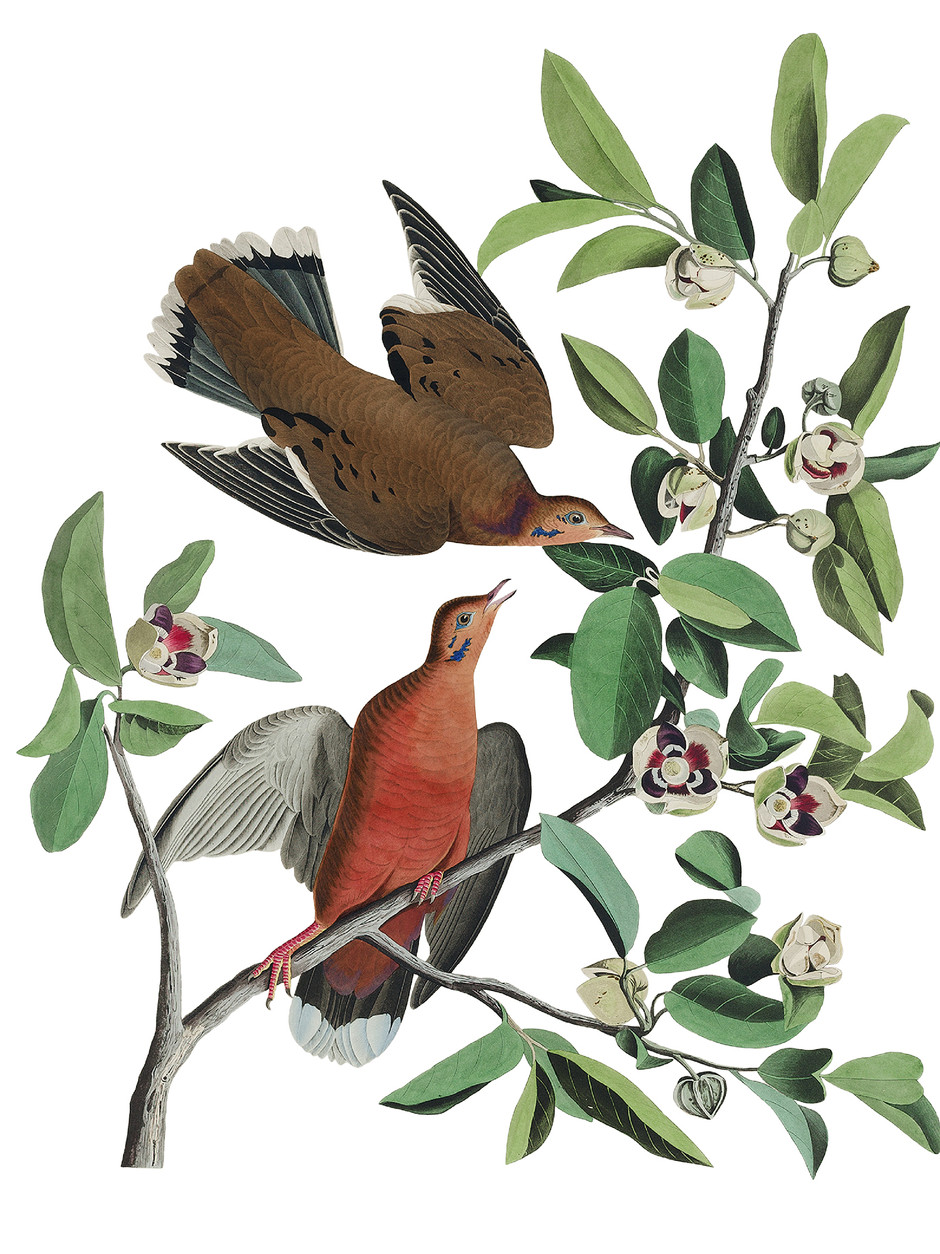 Copy of Birds 2. Nature vintage collection.
