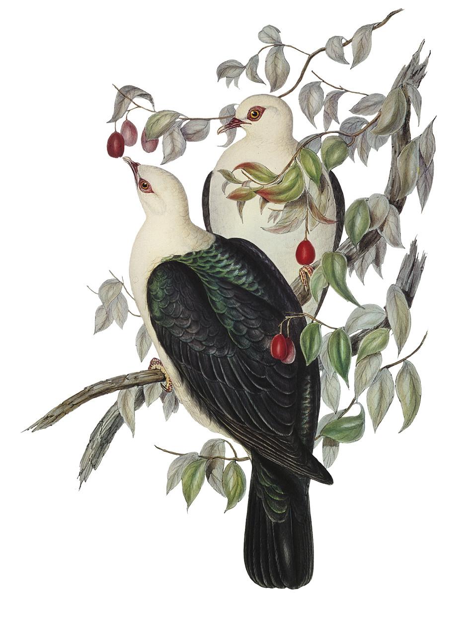 Birds 1. Nature vintage collection.