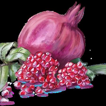 Pomegranate isolated on transparent background