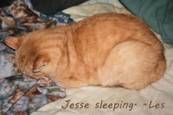 Jesse-text.