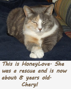 HoneyLove-text