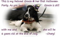 Gracie-text