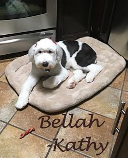 Bellah2