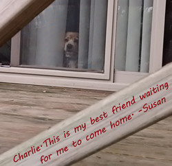 Charlie-text