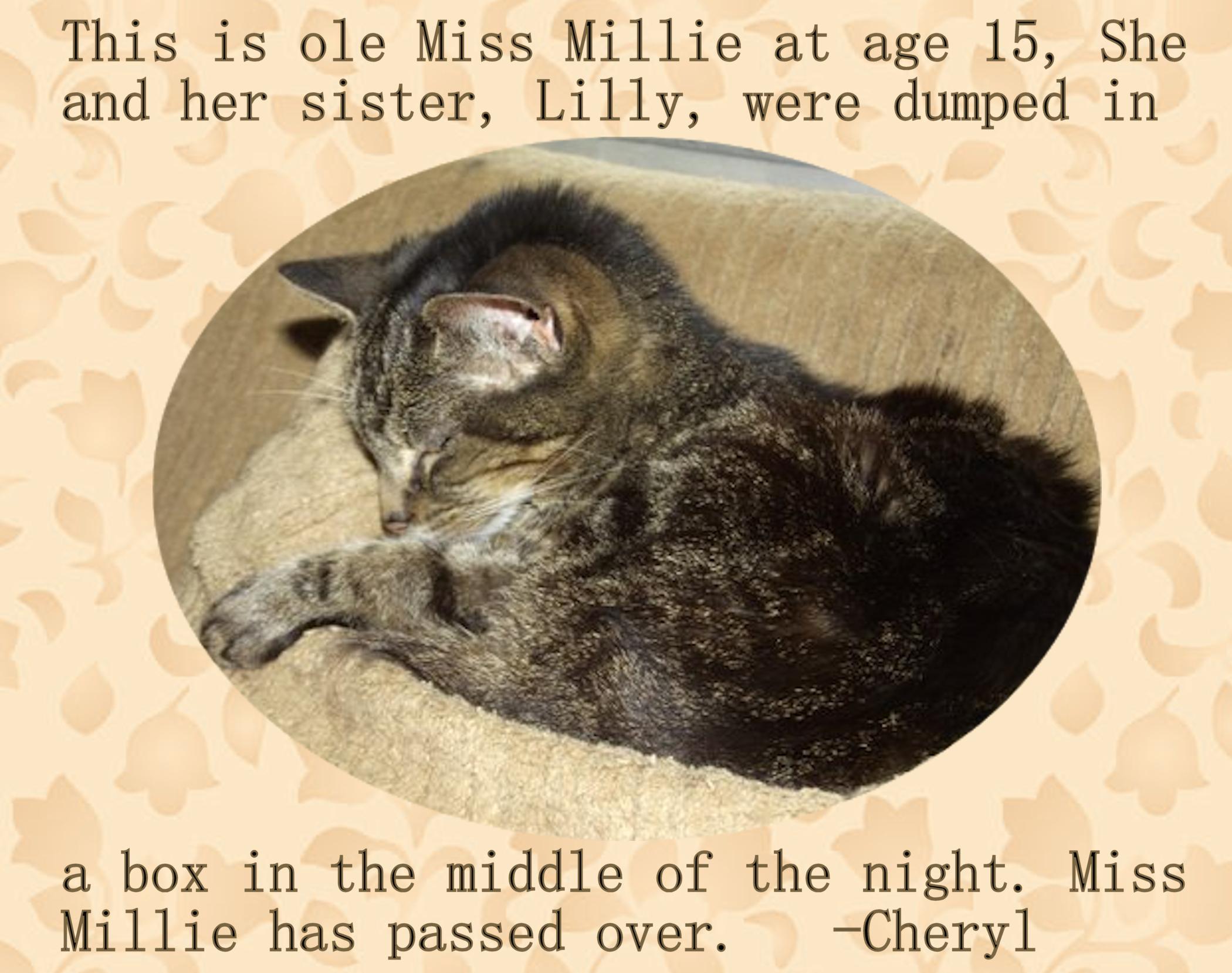MissMillie