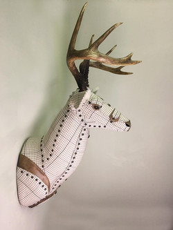 Deer17b