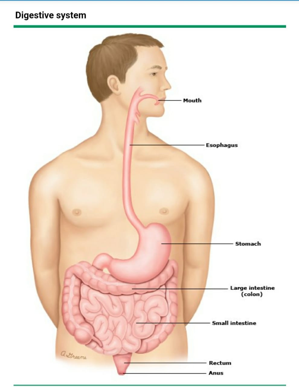 Crohns disease is treated by a Gastroenterologist