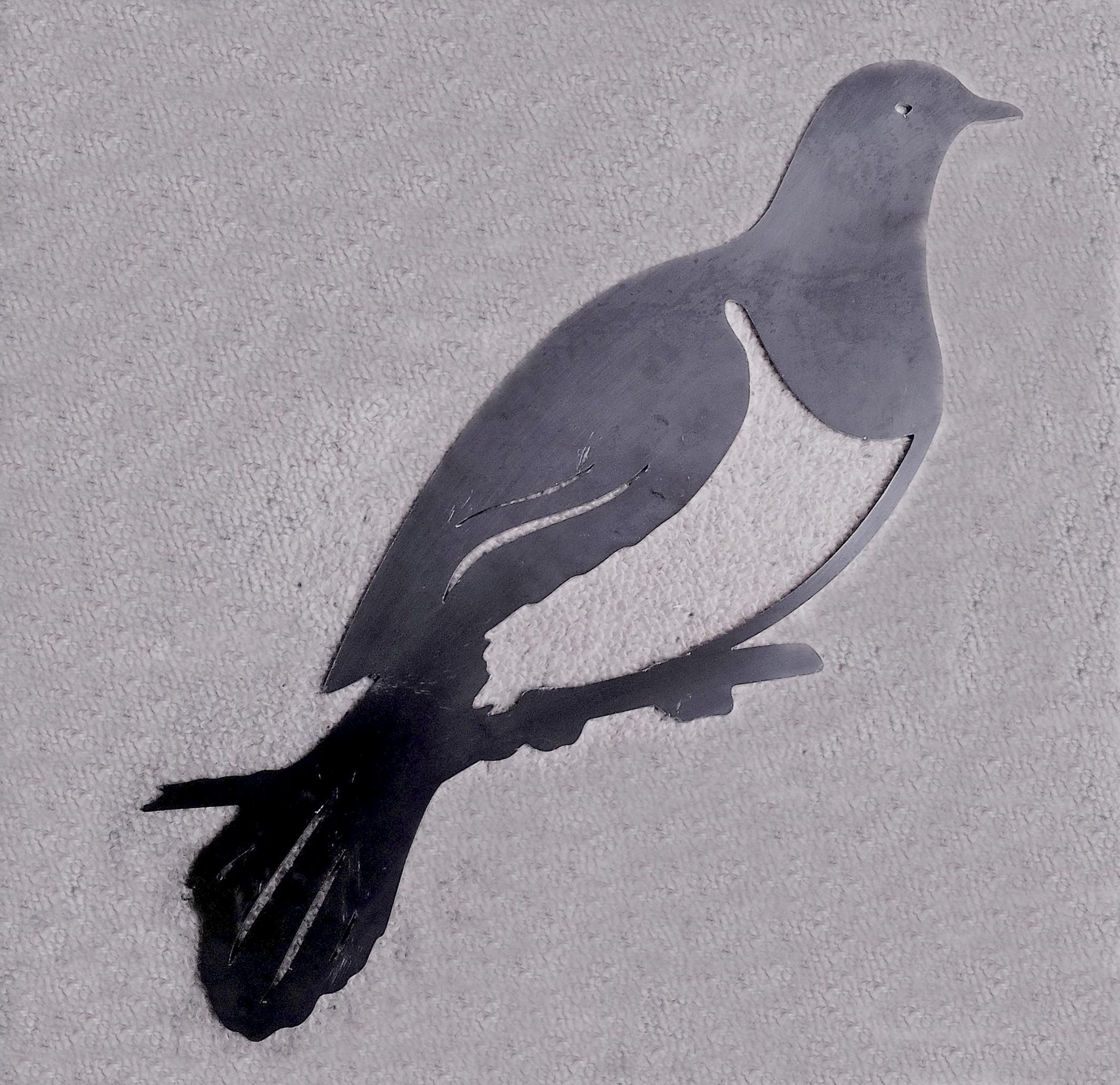 Kereru (Wood Pigeon)