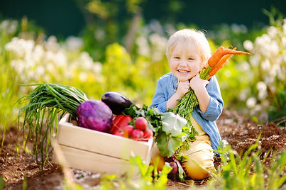 Cute little boy holding a bunch of fresh organic carrots in domestic garden. Healthy famil