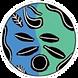 logo-saint-marc.png