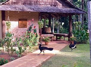 Atta Rainforest Lodge.jpg