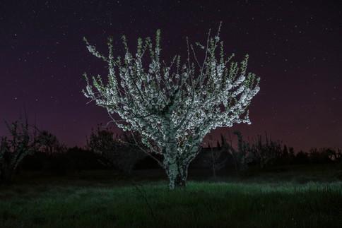004_Nachtaufnahmen_Issirac_Web_©susanneg