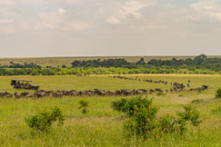 Emboo_The Great Migration at Emboo RiverCamp_-_Brian_Siambi®-159.jpg