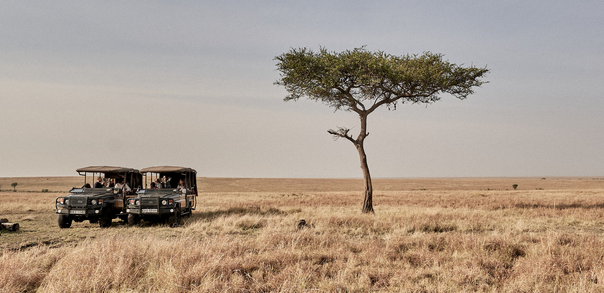 Game drive through the Maasai Mara