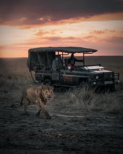 Emboo River Safari with Lion