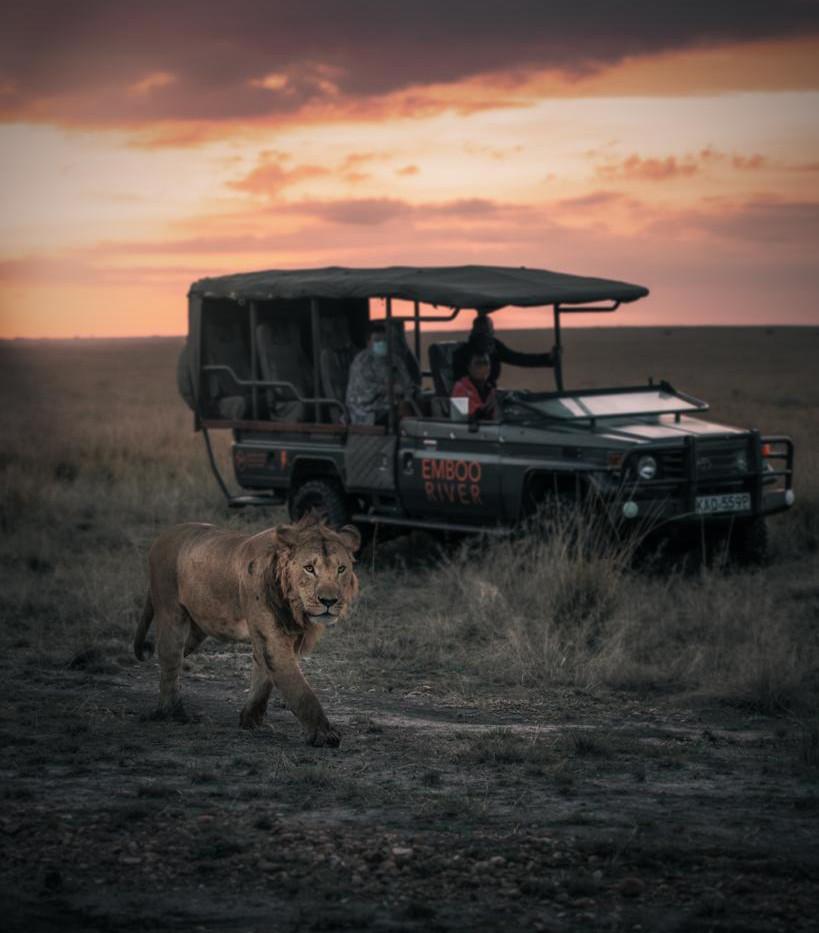 Emboo River Safari with Lion.jpeg