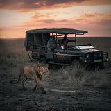 Lion Sunrise with Car.jpg