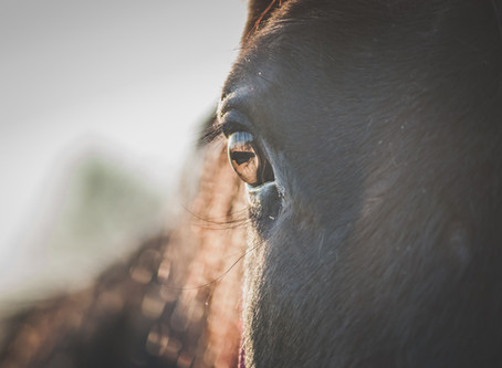 THE SPOT LIGHT - HORSE ADDICT