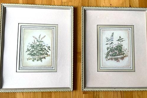 Herb Prints (2)