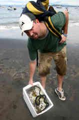 Pelagic Sea Snakes