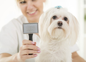 UK dog owners spend £57bn on pampering their pets every year