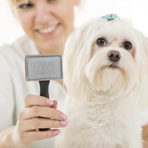 Dog Grooming Basics