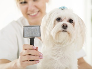The Importance of Grooming your Pup!