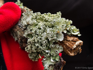 Lichens in Winter Hike