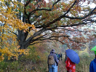 Fall Foliage Hike