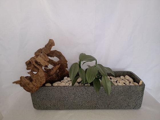 Philodendron Silver decorado