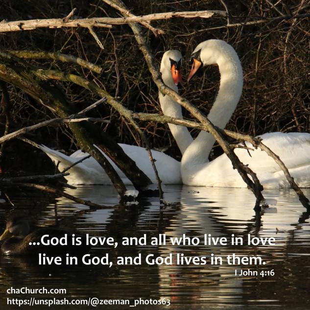anytime swan I John 4-16.jpg