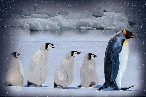 Penguin Panel