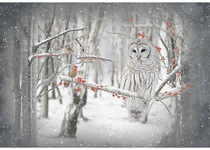 S4722-Owl & cardinal panel.jpg