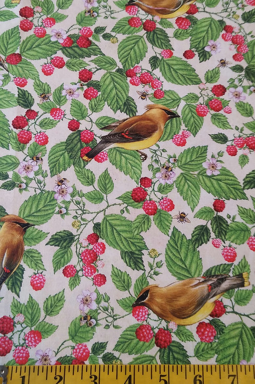 Cedar Waxwing & Raspberries