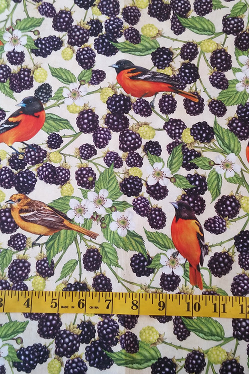 Baltimore Oriole and Blackberries