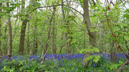 allestree woods.jpg