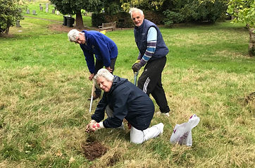 2 planting crocuses.jpg
