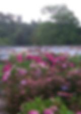 hydrangea-cover-picture.jpg
