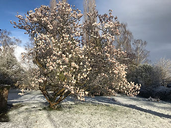 6 garden in snow (2).JPEG