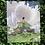 Thumbnail: Crystal Portal