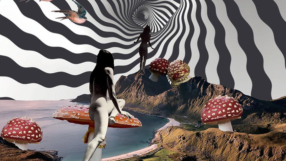 Mushroom Exploration