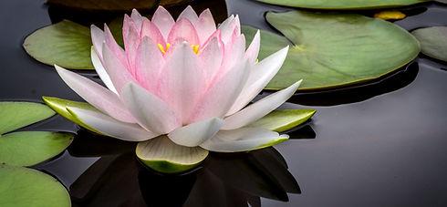 Pristine water lily_edited_edited.jpg