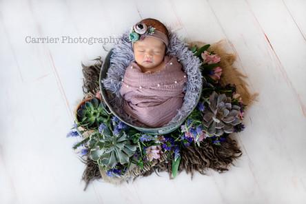 Florida-newborn-photos-Clearwater-Dunedi