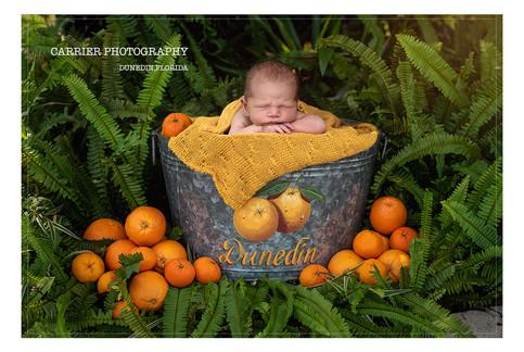 Dunedin-Florida-oranges-Newborn-photos-C