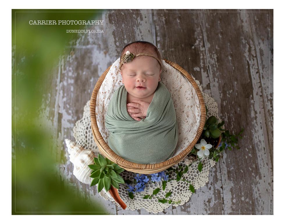 Florida-newborn-photos-Clearwater-Tampa-