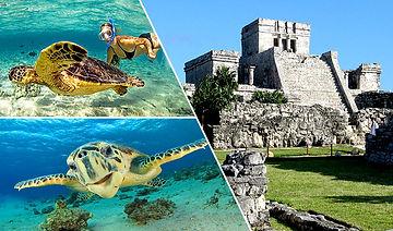 tulum-turtles.jpg