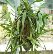 Orchid Treated.jpg